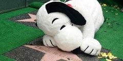Snoopy recibe una estrella en el Paseo de la fama de Hollywood