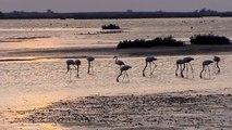 Climat : En Camargue, des habitants engagés dans les prises de décisions concernant leur paysage