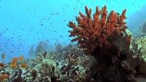 La répartition des espèces marines se modifie avec le changement climatique