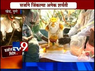Farewell Ceremony of HIND KESARI Sarja Bull at Pune-TV9