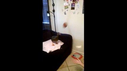 Une fille joue à la balle avec un canard