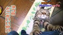 ネコ好きもネコ嫌いも必見! 「だからネコが大嫌い」2時間SP 10/21(�