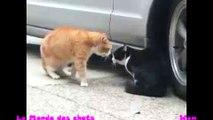 Chat énervé contre un autre chat