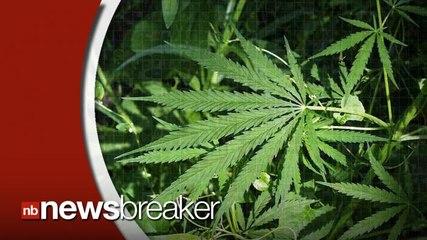 Ohio Votes Against Legalizing Marijuana