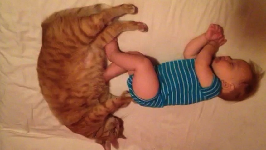 Little Baby And Fat Cat Massage Each Other