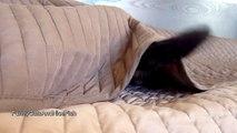 Funny Cats : Spy Cat named Rocky