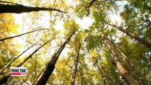 Spot-20151027 viewfinder GOLDEN GINKGO TREES 20151027 뷰파인더 서울숲 은행나무