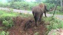 親子愛と野生動物のたくましさ!生まれたばかりの赤ちゃんゾウを手助けする母親ゾウの姿に感動