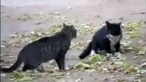 Perro Evita Pelea De Gatos! jaja ★ humor gatos - video divertido gatos chistosos risa gato