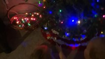 Oh Christmas Tree ~ Gabe and Babe Vlog