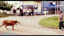 Funny Animals Funny Fails 2015 Funny Cat, Dog and Pets Videos Ever