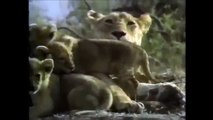 Crater Lions of Ngorongoro African Animals Wildlife Documentary | Full Documentry | HD Doc