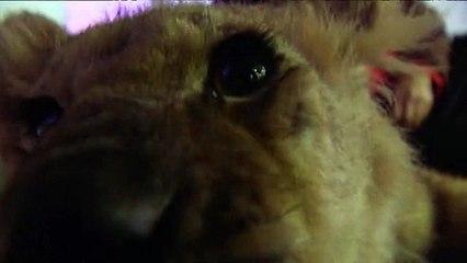 Un lionceau à France 3 Picardie