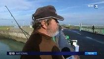 Un trafic de poissons a été démantelé dans le Nord-Pas-de-Calais