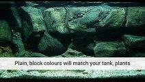 Aquatic Plants Tank Aquatic Plant