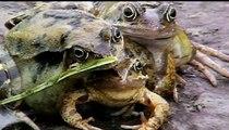 10 Creepy Animal Mutations - Weird Birth Mutations -