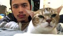 Un chat bouge sa tête avec son maître sur le morceau Hotline Bling de Drake.