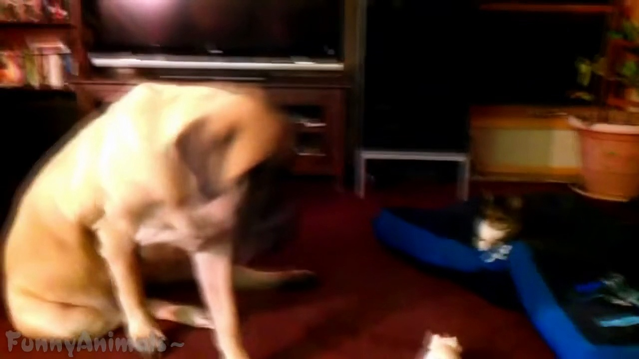 Funny Cats Stealing Dog Beds – Best Cats Videos