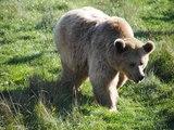 Le parc  Ste croix de Rhodes ( 57 ) le repas des ours