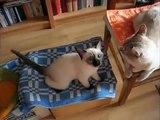 Massage für Katzen. Lustige Katzen lieben Massagebürste