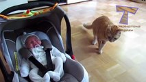 Cats and dogs meeting babies for the first time Cute animal compilation - Sweet Babies