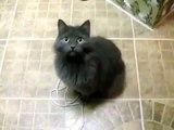 Кошка разговаривае