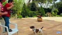 Bulles de chasseurs. Funny Dog attraper des bulles de savon