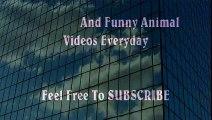 Man VS Donkey Best Wild Animal Videos   Animal Attacks And Loves when animals attack