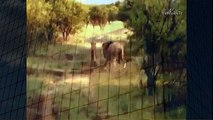 Lion Mating Ritual up Close Animal Mating Live 2014 Animal Mating Live   YouTube when animals attack