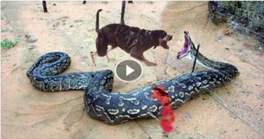 Giant Snake Vs Dog Check Out Who Will Win