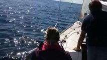 Ils profitent du bon temps sur leur bateau, mais ce qu'ils vont voir nager dans les vagues va les étonner