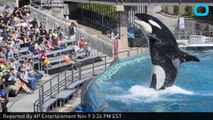 SeaWorld to End Orca Shows by 2017 in San Diego