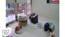Parrot chasser les chats. Refroidir calopsitte perroquet porté pour les chats
