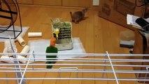 Parrot jouer avec gopher. Drôle écureuil et un perroquet