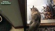 La première neige et chats. Funny cats jouent dans la première neige