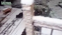 La première neige et les chiens. Chiens drôles batifoler dans la neige