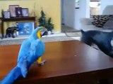 Aras jouant avec le chien. Drôle perroquet et un chien