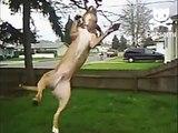 Пёс атакует дерево. Смешной пёс вцепился в ветку дерева