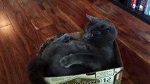 MDR : Un chat s'attaque à sa propre queue !