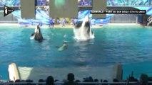 Etats-Unis : Le parc SeaWorld met fin à son attraction avec les orques