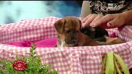Cronache Animali Rai 2 - Vaccini nel cane e nel gatto