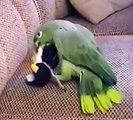 O papagaio não ama pinguins. Papagaio que joga com o pinguim suave