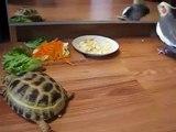 Parrot nerveux, mais la tortue mange. Drôle perroquet et une tortue