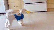 Perroquets avec un chien. Perroquet jaune et un chien