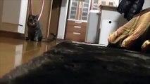 Прикольные кошки. Смешные кошки прикалываются