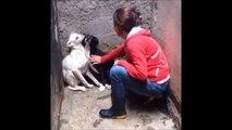 2 chiens pétrifiés de peur secourus après avoir été abandonnés