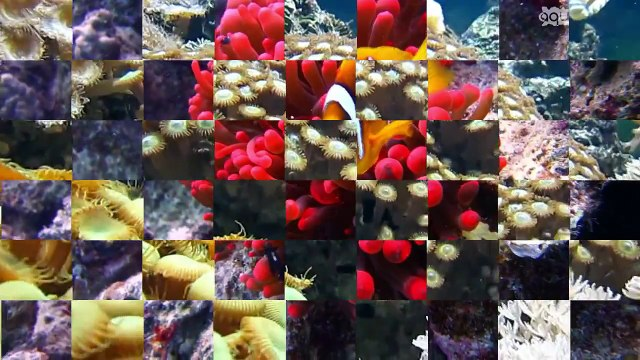 Beautiful world of coral reef, fish | Most beautiful great barrier reef