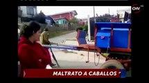 Caballo en malas condiciones colapsó mientras tiraba carreta CHV Noticias