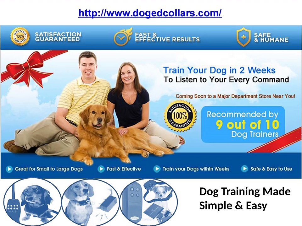 Top Dog shock training collars
