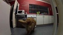 Adorable : ce chien récupère son doudou dans la machine à laver